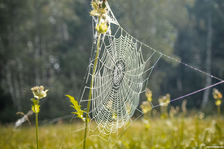 spider track Ennswiese Austrialandscapes Styria