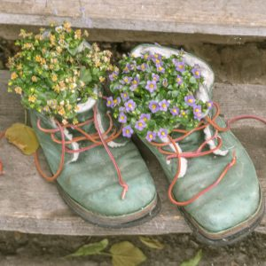 FootSteps Ennswiese Austrialandscapes Styria