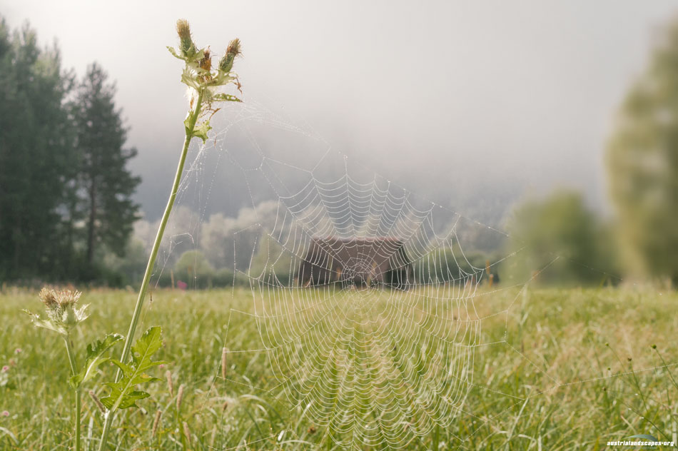 beyond the web Ennswiese Austrialandscapes Styria